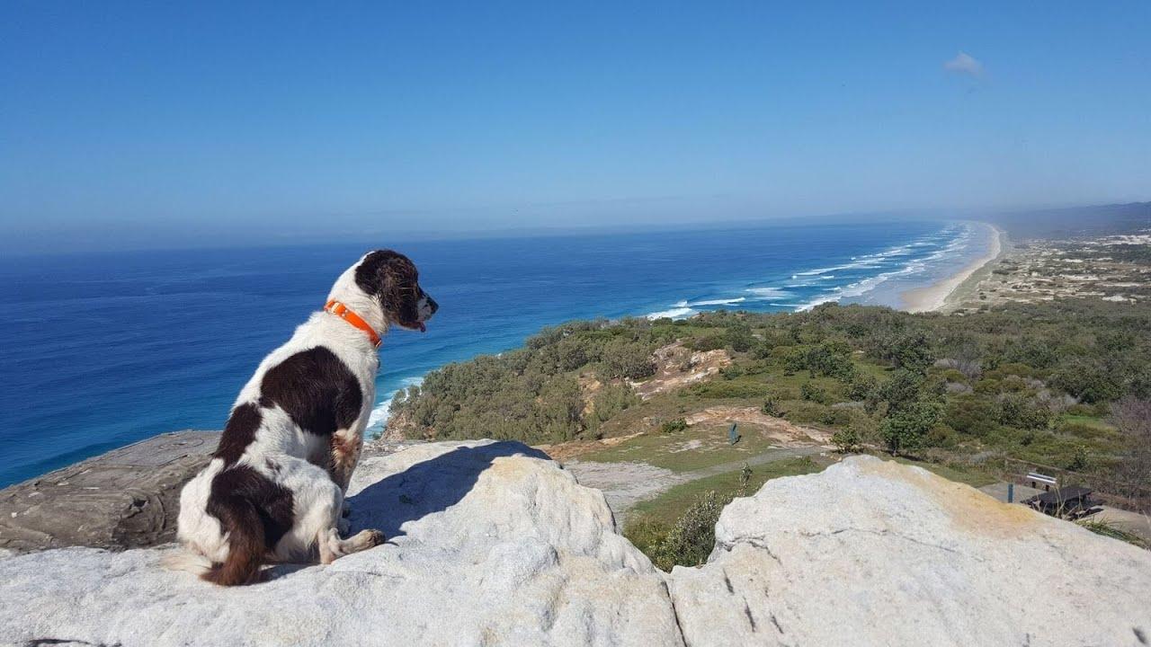 Steve Austin's Canine Training and Behaviour