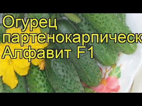 Огурец партенокарпический Алфавит. Краткий обзор, описание характеристик cucumis sativus | партенокарпический | описание | краткий | алфавит | огурец | обзор | sativus | cucumis