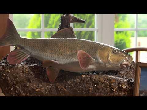 Missouri Record Fish Stories - River Redhorse Sucker