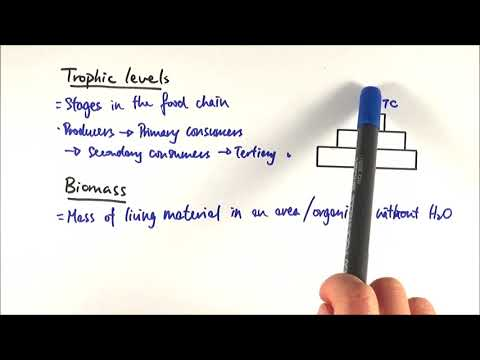 A2 Biology - Trophic Levels And Biomass (OCR A Chapter 23.2)
