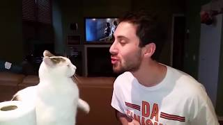 NEW MEGA Funny Cats Reactions to Human Kiss