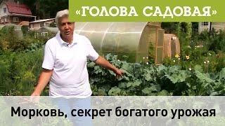 Голова садовая - Морковь, секрет богатого урожая