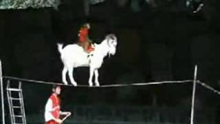 Repeat youtube video A Monkey on a Goat on a Cup on a Tightrope