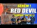 Aksi Murai Batu Red Devil Milik Mr Pur Wonogiri Klaten Vaganza  Mp3 - Mp4 Download