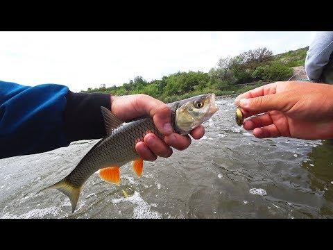 КАК и ГДЕ поймать ГОЛАВЛЯ в МАЕ и ИЮНЕ? Мастерски ловим рыбу с одного места!)