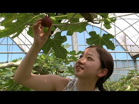 Fig  Beyond Sweet  Taiwan Leisure Farms Development Association  Full HD 5 Minutes