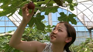 Fig  Beyond Sweet  Taiwan Leisure Farms Development Association  Full HD 5 Minutes