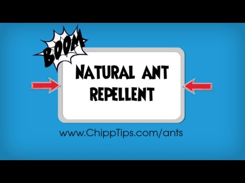 Natural Ant Repellent Recipe
