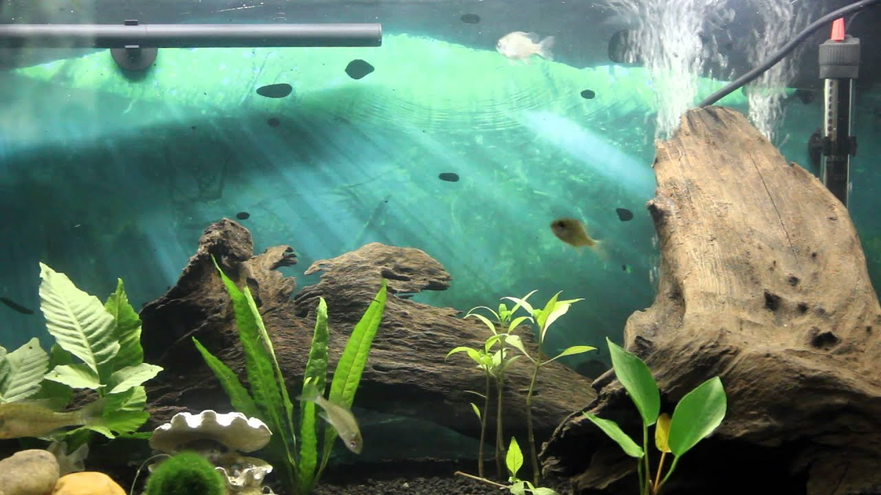 7 1 2 minutes of fish swimming in a aquarium bass bream for Bluegill fish tank