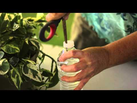 How to Make a Self-Contained Plant-Watering System for Vacation : Solving Plant Needs