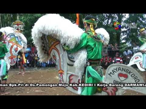 Jaranan Mayangkoro Original - Perang Celeng 2. Live Mojo Pamongan