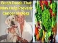 How To Prevent Cancer In Dogs  health cancer prevention disease symptoms