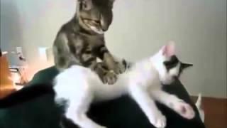 Прикол  Котенок делает массаж  Kitty massage