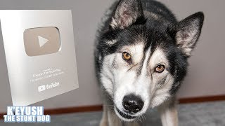 Telling My Dog He's On Youtube! He FLIPS Silver PlayButton!