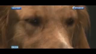 Ученые доказали, что собаки понимают смысл слов