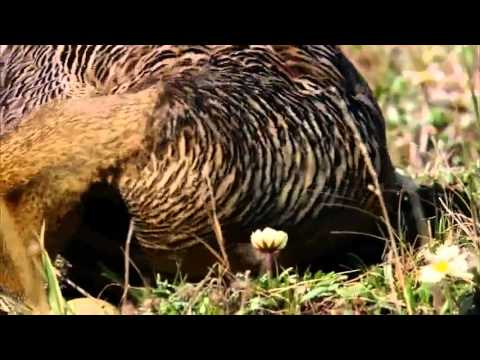 Wild animals: wild Russia _ Siberia hd National Geographic