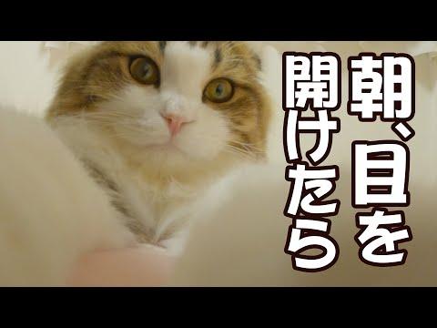 【癒し】毎朝もふ猫が枕元に来てゴロゴロ音で起こします