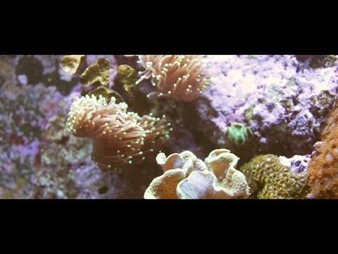 Beneath The Surface - Threatened Marine Ecosystems