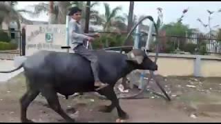 Hath Ma Chhe Whiskey   Jignesh Kaviraj   Gujarati Song   Latest Gujarati DJ Songs 2017