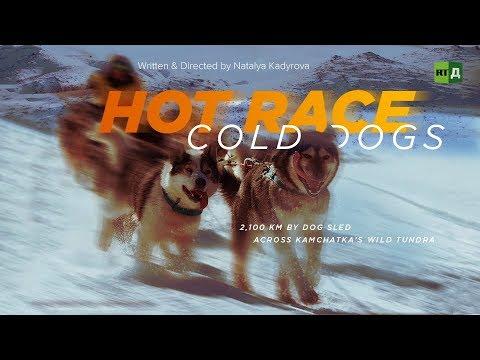Hot Race, Cold Dogs: 2,100 Km By Dog Sled Across Kamchatka's Wild Tundra