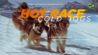 Hot Race, Cold Dogs: 2,100 km by dog sled across Kamchatka's wild tundra