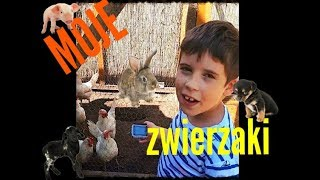 Moje zwierzaki - kury, kaczki i króliki! #pjoter.m VLOG odc. 2