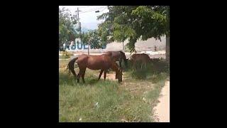 Animais vadios bairro Cajueiro Blog GJ