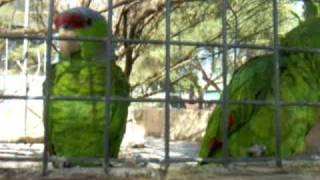 Papageien im Safari Zoo Cala Millor, Mallorca