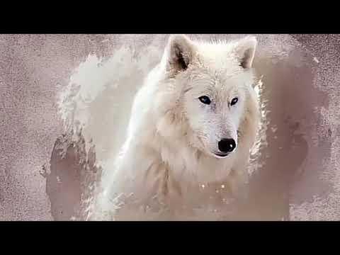 Белый волк - Control