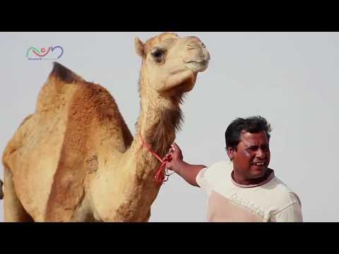 Maravichoru Manassil -Super Hit Pravasi Song by Riyas Kariyad