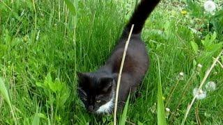 Cat marks territory.  Кот метит территорию