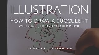 Illustration - How To Draw A Succulent With Pencil, Ink, And Colored Pencil