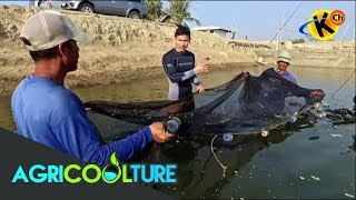 AgriCOOLture: Fish Farming and Harvesting Tools