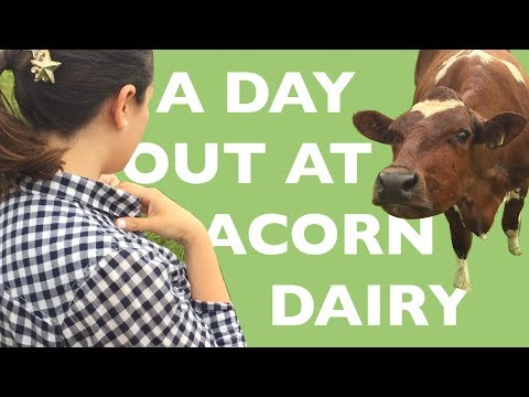 Visiting the Organic Acorn Dairy Farm - How to Make Butter - Riverford Boxes