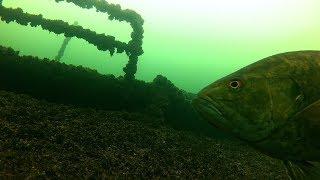 Ship Wreck! AMAZING Underwater Ice Fishing Footage