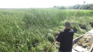 White Earth Wild Rice Harvest- Manoominikewag