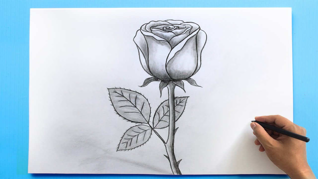 Download ROSE Drawing Easy 🌹  How to Draw a Rose step by step
