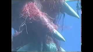 Sperm Whale Rescue