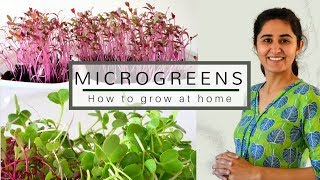 How to grow Microgreens from vegetable seeds  🌿🍀🌿