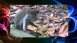 Смешные животные   Обезьяна Акрабатка 2014
