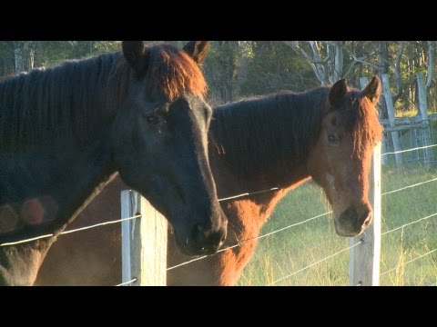 Horse Foundation Training And Equitation Science