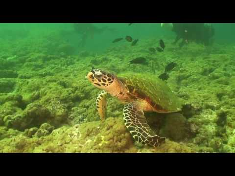 Diveworld Videos | taste of maldives movie