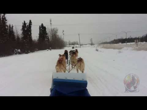 Wolf Pack Sled Dog Trail Rides 2014