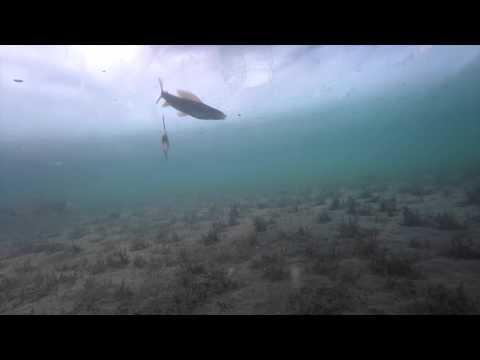 Ice fishing grayling