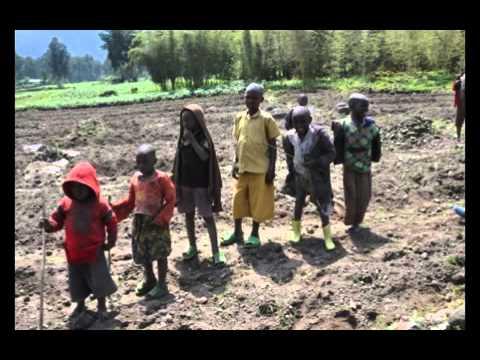 Download Rwanda Gorillas Debbie Goff