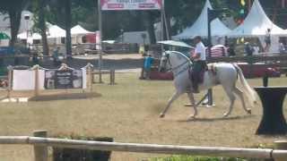 Parcours équitation de travail Tarbes