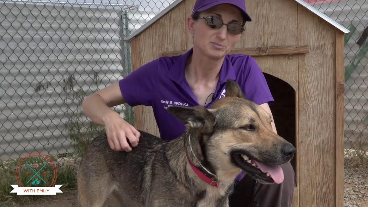 Dog Training Santa Fe