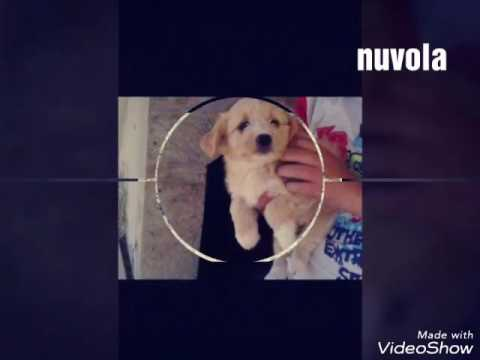 nomi per cani femmine youtube