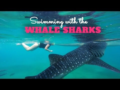 Snorkeling with Whale Sharks in Oslob Philippines [ GoPro Hero 3+ Black ]