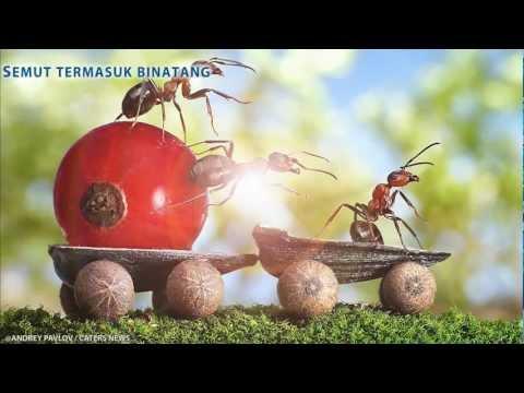 Semut Yang Rajin